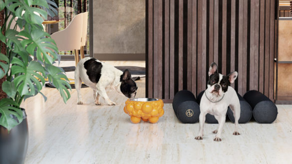Pets - Make your friend the stylish ever