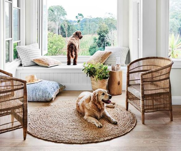 Dogs and Their Design Homes