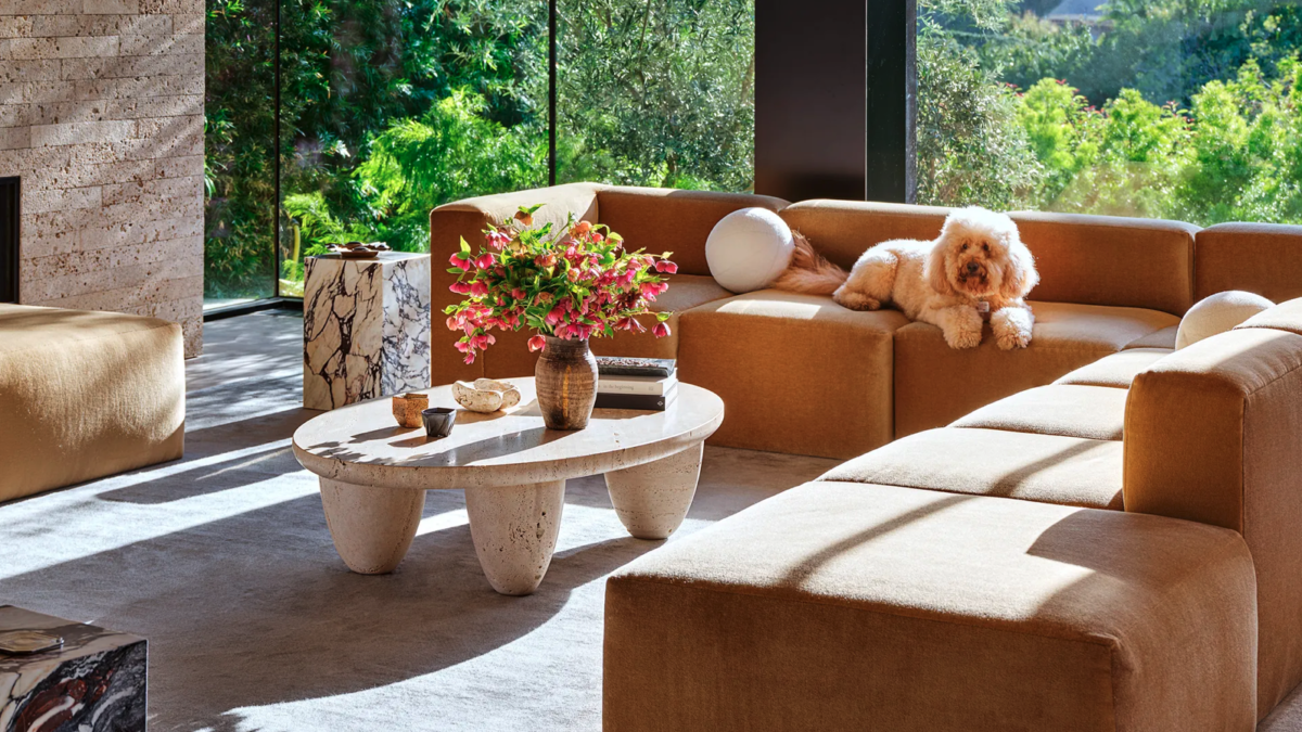 Living Area – Transform It into a More Pleasant Space for your Pet Friends